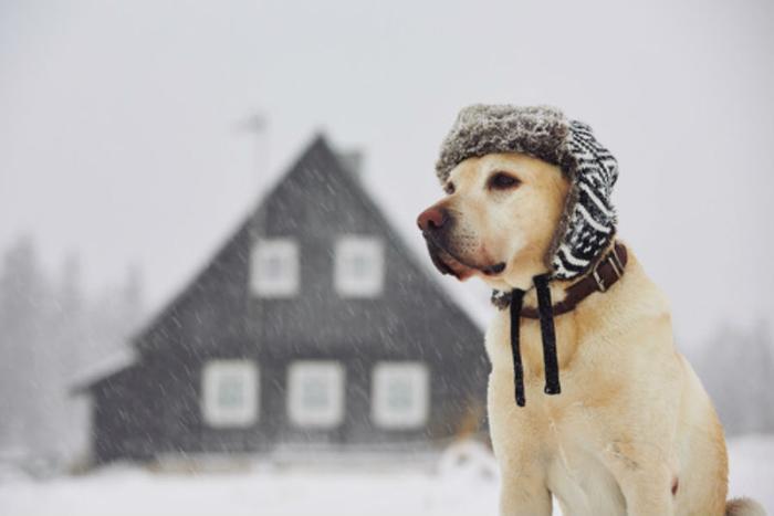 Cum ai grijă de cățelușul tău în sezonul rece?