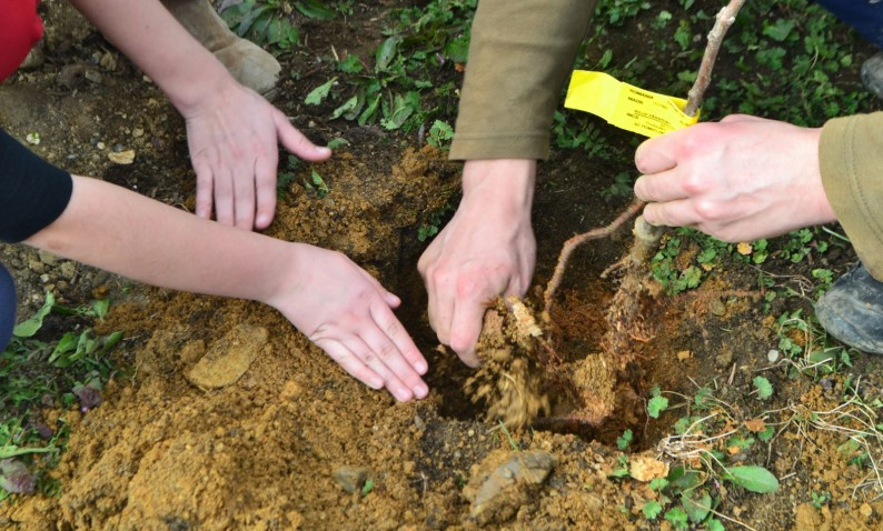 contribui prin plantarea arborilor