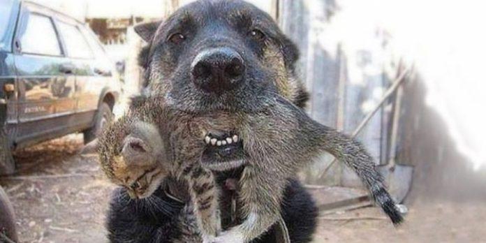 câine dintr-un incendiu