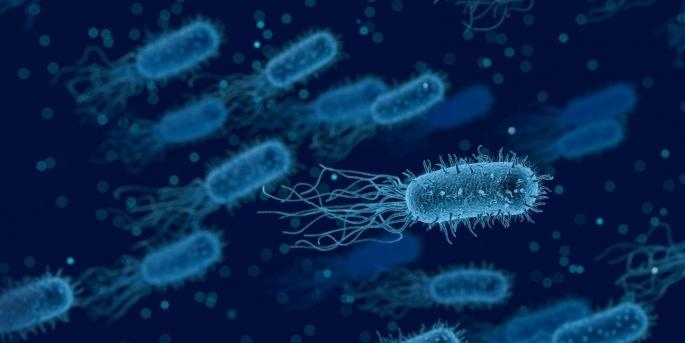 virusuri și bacterii