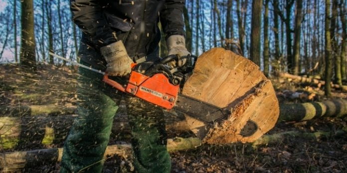 tăierile ilegale de arbori din Maramureș