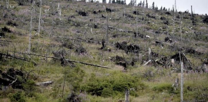 tăieri ilegale în pădurile sucevene