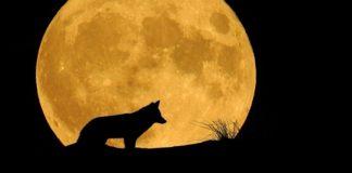 M-am îndrăgostit de-un lup