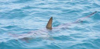 atacat de un rechin