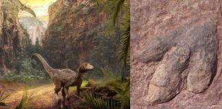 urme gigantice de dinozauri