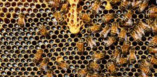 lucruri interesante despre albine