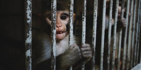 drepturile animalelor