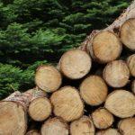 furtul de arbori