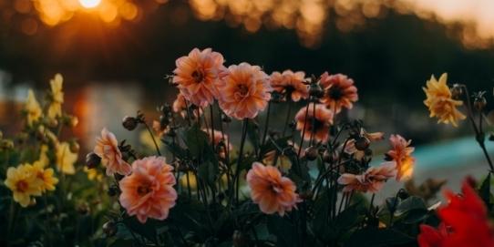 grădină botanică
