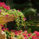 grădinile botanice