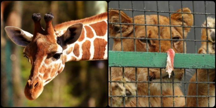 grădinile zoologice