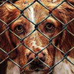 adăpost canin