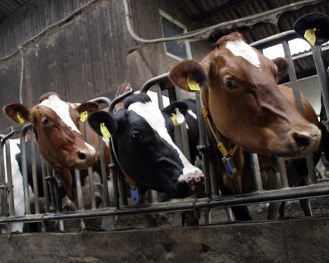 industria lactatelor
