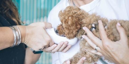 medicină veterinară